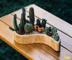 Suculentas em minivasos são pequenas demonstrações do esplendor da natureza. Detalhes que fazem toda a diferença na decoração de sua casa ou jardim. <3