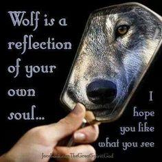 Petra Schmidt Shared Fan of Wolves Photo