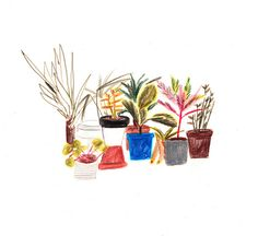 Plant Pots | Lizzy Stewart #drawing #illustration