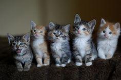 kittens<3
