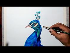 Drawing a peacock - step by step tutorial - Prismacolor pencils. - YouTube