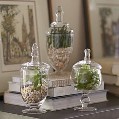 Found it at Birch Lane - Apothecary Jar Set. I usually use apothecary jars in the bathroom, kitchen or at Christmas, but this is a very creative way to use them all year around. Air plants would also be nice in them. Apothecary Jars Decor, Decoration Plante, Humming Bird Feeders, Decorated Jars, Decorating Coffee Tables, Coffee Table Centerpieces, Centrepieces, Traditional Furniture, Deco Table
