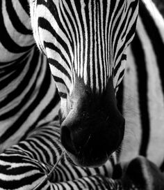 Black and White Animal Photography (50 pics)