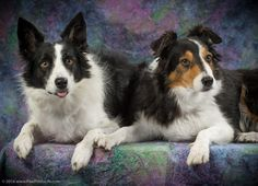 Kathy Smith's Robin and Carly at our recent HDTC photo event.
