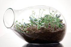 botany factory - low maintenance terrariums