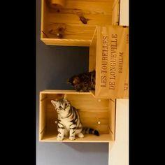 Bauen Sie Ihr Katzenbaum selber mit einer einfachen Weinkiste. Wir von Weinkistenholz.ch haben eine sehr große Auswahl an Weinkisten, Weinkisten-Deckel und gravierten Brettern. Besuchen Sie unsere Homepage: www.weinkistenholz.ch #katze #cat #cats #instacat #katzenliebe #katzen #catlover #gato #kitten #chat #catlife #catlovers #gatto #cute #katzenleben #catlove #katzenbaum #weinkisten #selberbauen #katzen #katzenaufinstagram #katzenfreunde #katzenzubehör #katzenglück #katzenvideos #katzenm Cat Supplies, Cat Lover, Cat Toys, Bookends, Home Decor, Stars, Cat Breeds, Atelier, Decoration Home