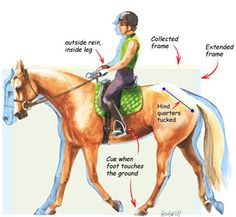 "Help strengthen your horse's back and hindquarters with advice from #AQHA Professional Horsemwoman Michelle Just-Williams! In ""Calling Up the Quarters"" on America's Horse Daily, she offers a #horsetraining exercise that will teach your horse to use his hind end. Discover more at http://americashorsedaily.com/call-up-the-quarters/"