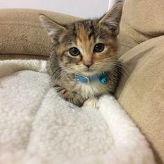 Meet Jax! My sister's new cat! http://ift.tt/2gKIQap