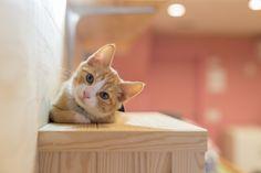 Jak zadbać o bezpieczeństwo kota w domu? Image Cat, Stock Photos, Explore, Animals, Products, Animales, Animaux, Animais, Beauty Products