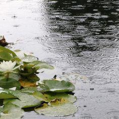 Gardening, gardeners, nature and art The Garden Of Words, I Love Rain, Rain Days, Rain Photography, Sound Of Rain, Lily Pond, Rainy Season, When It Rains, Thunder And Lightning