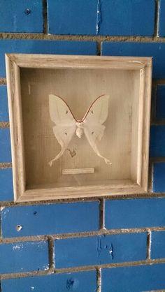 Vlinder ingelijst by nicasdeco