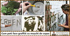 Cum poti face graffiti cu muschi de copac