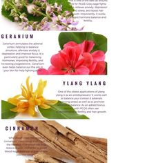 top-5-essential-oils-for-pcos-infographic