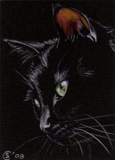 Black CAT 113