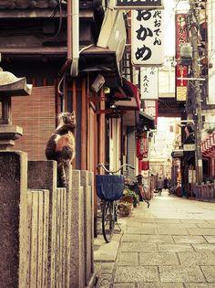 19 photos de chats posant dans différentes villes du monde