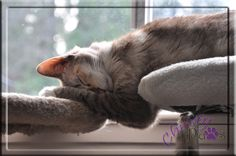 WW Two level sleeping - finalist in the BlogPaws Nose-to-Nose Awards 2016