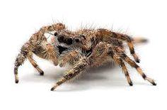 Znalezione obrazy dla zapytania pająki