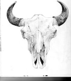 Bull Skull Drawings | bull skull by j44314 traditional art drawings animals 2011 2013