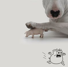 This Little Piggies Going To Market ~ Jimmy Choo & Rafael Mantesso