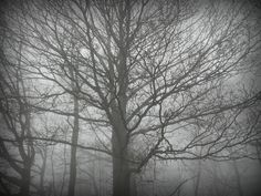 tree, black and white, loneliness