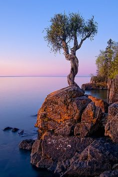 tree overlooking Lake Superior, Grand Portage National Monument, part of the Grand Portage Ojibwe Indian Reservation, Minnesota