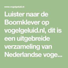 Luister naar de Boomklever op vogelgeluid.nl, dit is een uitgebreide verzameling van Nederlandse vogelgeluiden. Werkt ook op jouw mobiele telefoon!