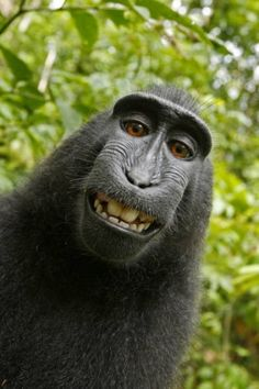 Felice come un macaco....