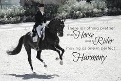 """""""there is nothing better than a horse and his rider moving as one in perfect harmony"""".  equestrian and horse quote"""
