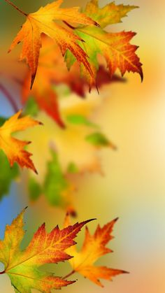 Samsung Galaxy S7 and S7 Edge Alternative Wallpapers - autumn leaves