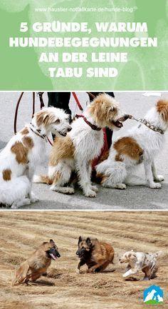 Hundebegegnungen an der Leine sind tabu - oder nicht? Jetzt im Haustier Notfallkarte Hunde Blog! #haustier #notfallkarte