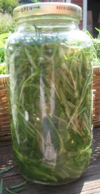 DIY Rosemary Tincture (used for poor circulation, stimulating hair growth, improving memory and concentration. Pour vodka over the rosemary and leave in a dark place for two weeks. Use drops in a glass of water, up to 3 times a day, especially before bed) Herbal Remedies, Health Remedies, Home Remedies, Healing Herbs, Medicinal Plants, Herbal Tinctures, Herbalism, Natural Medicine, Herbal Medicine