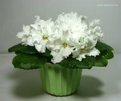 Garden Plants, African Violets Plants, Flowers, Potted Plants, Houseplants, Plants