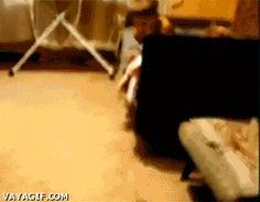 That cat ! ;D