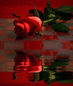 Decent Image Scraps: Beautiful Rose