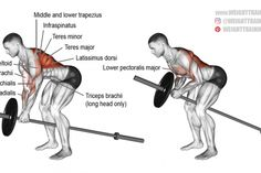 Landmine row exercise https://www.musclesaurus.com/
