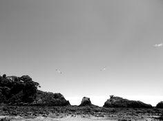 Love Birds #RobertonIsland #Paihia #NZ