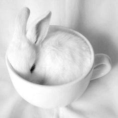 White Cute Bunny In Cup - Tap to see more cute animals that will make you go 'Aww' wallpapers. Bunny Love, Cute Bunny, Bunny Rabbit, Tiny Bunny, Adorable Bunnies, Cute Baby Animals, Animals And Pets, Funny Animals, Funny Pets