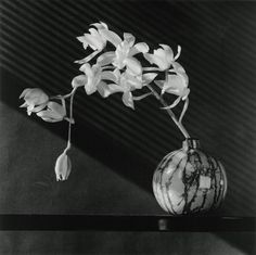 robert mapplethorpe photography - Поиск в Google