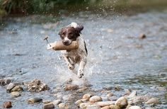 Oligoterapia cane gatto, essenziali per la salute di cani e gatti, allergie, asma felina, artrite nel cane, anemia, fibrosarcoma, stati infettivi, virus
