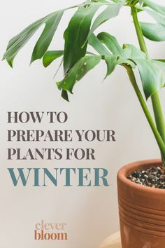 Winter can be hard on house plants. If you're a new plant parent, or just looking for good tips, you've come to the right place. I'm going to share with you my top 5 tips on How To Prepare Your House Plants For Winter! Best Indoor Plants, Outdoor Plants, Outdoor Gardens, House Plants Decor, Plant Decor, Pothos Plant, Belle Plante, Winter Plants, House Plant Care