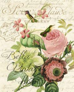 Botanical Pink Hummingbird Print: