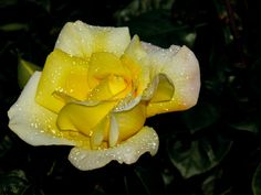 Fotografía Pearl Beauty por Susan  Chan  en 500px