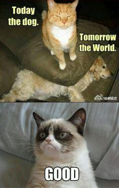 Grumpy Cat is just so wonderful. - - Grumpy Cat is just . Grumpy Cat is ju Gato Grumpy, Grumpy Cat Good, Grumpy Cat Quotes, Funny Grumpy Cat Memes, Cat Jokes, Funny Cats, Funny Memes, Funny Minion, Funny Clowns