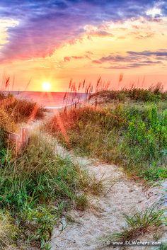 A path through the dunes to the beach in Kitty Hawk, North Carolina.