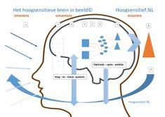 Hoogsensitieve brein in beeld - Hoogsensitief