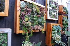 Vertical Garden Fence Decor This is really great! Succulent Frame, Vertical Succulent Gardens, Succulents Garden, Hanging Succulents, Succulent Planters, Hanging Plants, Garden Plants, Vertical Planting, Succulent Cuttings