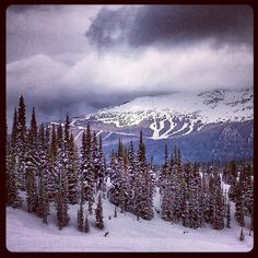 The view of Blackcomb mountian from Symphony zone on Whistler mountain #whistler #winter  nitalakelodge's photo on Instagram