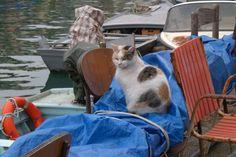 sea-cat