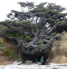 An otherworldly natural phenomenon, hidden on a secluded Washington beach.