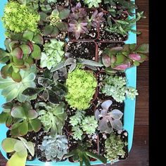 Macie Olstrom added a photo of their purchase Wholesale Succulents, Succulent Favors, Succulent Arrangements, Fairies, Miniatures, Unique Jewelry, Handmade Gifts, Plants, Wedding